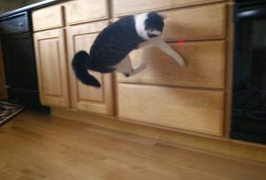 cat toy - laser pointer